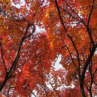 亀岡・嵐山から、伏見・灘の旅(一日目)〜嵐山から明智光秀ゆかりの亀岡を巡ります。福知山より生々しいかも〜