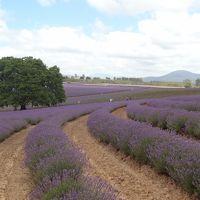 2013/14 年越しハネムーン@タスマニア� Ross, Bridestowe Lavender Farm