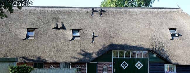 ツール・ド・エウロパ 2013 オランダ編 1...