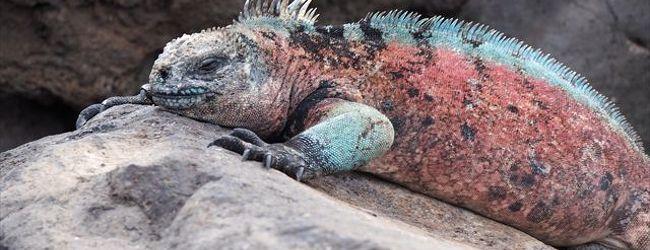 不思議で素敵な動物たちの楽園 ガラパゴス...