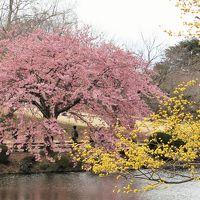 東京ふらり散歩2014春