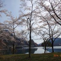 まだ桜が楽しめます