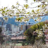 中央線特快電車で行く、桜と新緑の青梅ハイキング