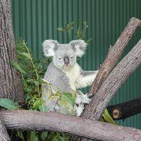 子供連れオーストラリア旅行