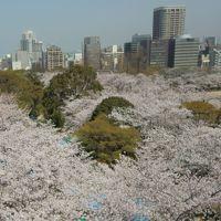 桜満開の福岡から別府へ
