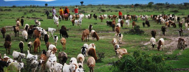 野生とは何かを考えた旅 ケニア ナイロ...
