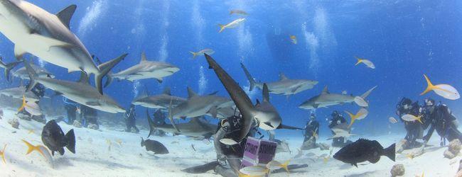 カリブ海バハマでダイビング♪宿泊はATL...
