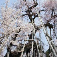 置賜・村山からいわきへ四日間(一日目)〜置賜さくら回廊は、まさに満開。南下する山形の桜前線にタイミングがぴったり合いました〜