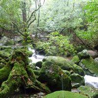 2014 Road to Yakushima 最終章� / 旅の概要&白谷雲水峡1日目