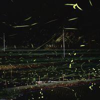 大阪の天然ホタルの最新情報  摂津峡(芥川) 水無瀬川 の情報です