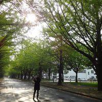 '14北海道で春を満喫!5泊6日オフ会の旅�「2日目は、きーちゃんとライラックデートのあと、すすきのでオフ会でした〜」