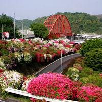 音戸の瀬戸公園のつつじと因島の除虫菊、季節の花を撮りに広島県へ