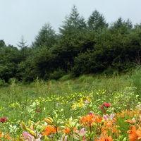 清里高原で涼風を感じ、箱根・権現さんにもお参りし、沼津・丸天で鮮魚を食す、真夏の日々の物語♪