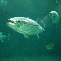 2014年ぐるっとパス第四弾 葛西臨海水族園・地下鉄博物館・日本科学未来館・お台場・あしたのジョー、時代展