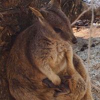 オーストラリアの動物や自然と触れ合う ケアンズ&アサートン高原6日間・後編