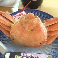 「足立美術館・出雲大社・鳥取砂丘」2日間のツアーに行ってきました�〜鳥取砂丘と「ブランドタグ付松葉ガニ」の夕食
