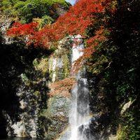 カメラをポケットに紅葉の箕面大滝まで自動車で出かけて見ました
