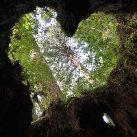 14年 女子旅 縄文杉に会いに屋久島へ