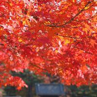 京の紅葉2014