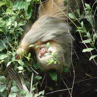 カーニョ・ネグロ野生保護区周辺