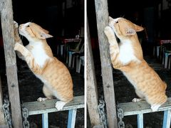 ★サラワク州のんびり旅 (2) クチン(猫)の街は本当に猫の街なのか?