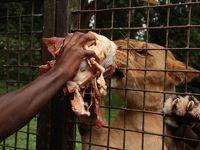 アフリカの真珠へ2 ウガンダ・ズーでVIPツアー