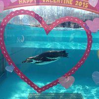 コアラの赤ちゃんを見に〜東松山市・埼玉県こども動物自然公園