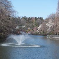 春の井の頭周辺散歩