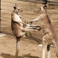 動物たちと花見!金沢動物園