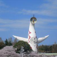 万博記念公園桜祭り