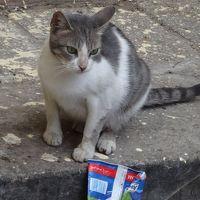 カイロの休日ーカイロに恋してー4、カイロの猫や犬たちその他