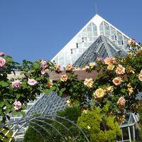 河内長野「花の文化園」に夢中・・・ 5月はバラ、クレマチス、シャクヤクが色鮮やかです