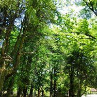 新緑の日比谷公園