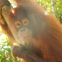 ボルネオ島(マレーシア)サバ州の自然に触れる旅 �セピロック(オランウータンに会いに)へ 5月1日(金)