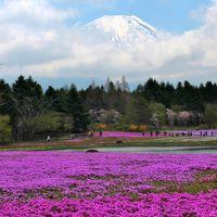 富士山麓花巡り