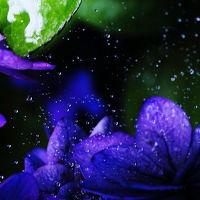 ◇◆水無月の鎌倉歩き&八景島シーパラダイスあじさい祭◆◇