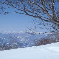 パウダー巡り<野沢温泉スキー場>