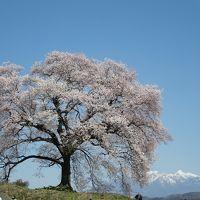 2014年4月 桜求めて山梨の旅