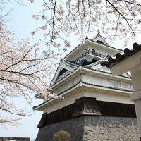 山形の桜 2日目