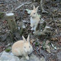 秋の安芸で癒される!�竹原&ウサギ島