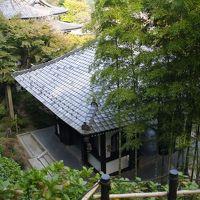 慌ただしい予定の中で、鎌倉の晩秋を楽しむ。