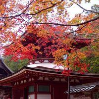 秋色の聖地へ!ーーー萌える高野山訪問記
