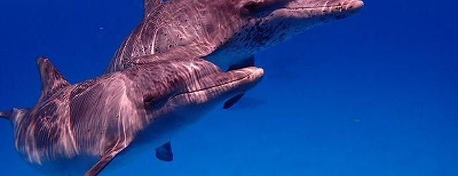 コバルトブルーの海で出会ったイルカたち