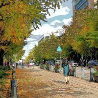 横浜秋さんぽ 日本大通いちょう並木〜みなとみらいXmasツリー