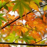 御岳山と紅葉