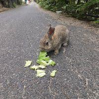 2015 平日広島アウェイ観戦とウサギの島散策【その4】うさぎ島でうさぎと戯れ(その1)
