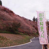 四季桜と紅葉の小原地区で秋を楽しむ