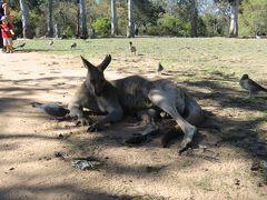 201409オーストラリア 〜ブリスベン・ゴールドコースト・シドニー〜