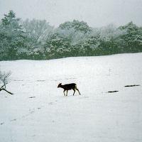 明日から明後日の積雪時は銀世界の奈良公園へ