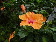Mahalo Hawaii Vol.1